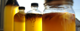 Health Benefits of Drinking Kombucha Tea