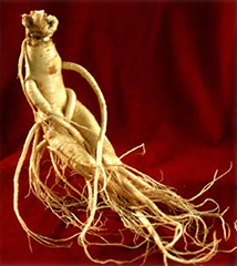 the-benefits-of-ginseng